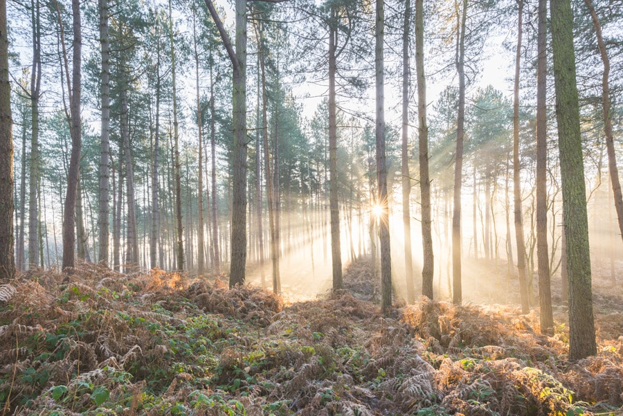 Misty sunrise at Delemere Forest in Cheshire