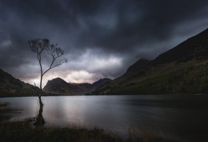 The lone Buttermere tree at sunrise on a moody morning