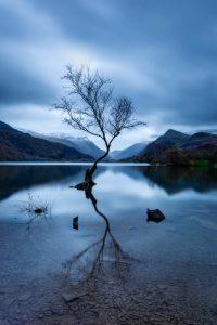 Lone tree at llyn Padarn, llanberis, Snowdonia, North Wales