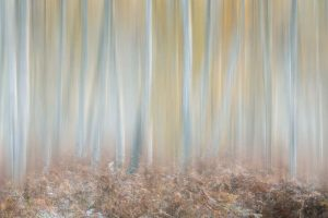 How to add motion blur to woodland shots in Affinity Photo after